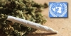 The U.N. attempts to thwart marijuana decriminalization laws in Washington and Colorado | THE JEENYUS CORNER